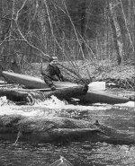 Chociaż woda była wysoka, to drzewa czasami stawały, tzn. leżały na naszej drodze, tzn. rzece.